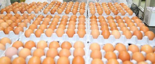 계란과 같이 성장을 돕는 7 가지 식품군 : Food & Drug Daily